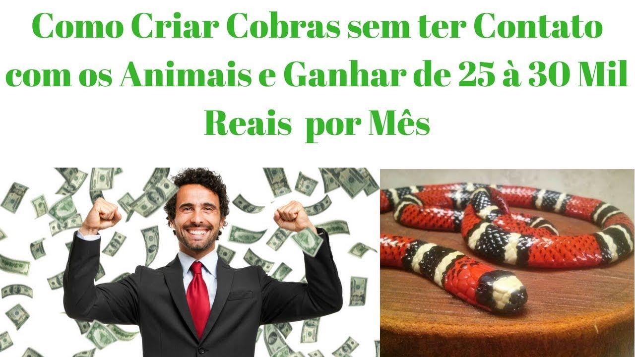 Como Criar Cobras sem ter Contato com os Animais e Ganhar de 25 à 30 Mil Reais  por Mês