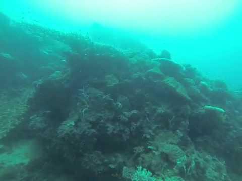 Fiji dive 1 The Zoo vid2
