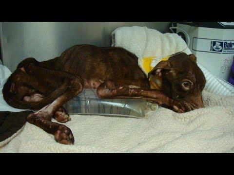 Пса сбросили в мусоропровод с 19 этажа… Он умирал от голода, но очень хотел жить