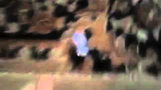 Прикол о писи кени