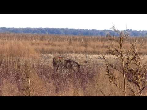 Wild Horses Walking - La Chua Trail, Paynes Prairie Preserve State Park, Gainesville, FL