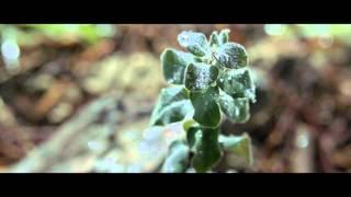 Arrowhead Mountain Spring Water: Water Sustainability