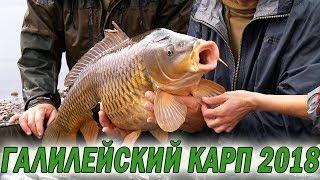 Карпфишинг 2018. Галилейский карп. Оз. Кинерет