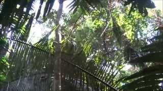 Singes hurleurs au Belize (Monkey River) - Octobre 2015