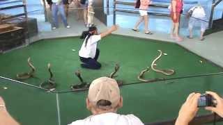 Snakes cobra show  Part 1