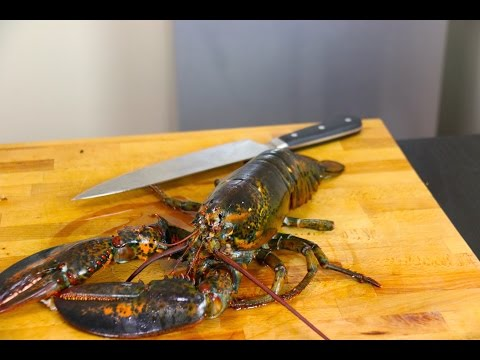 How to humanley kill a Lobster
