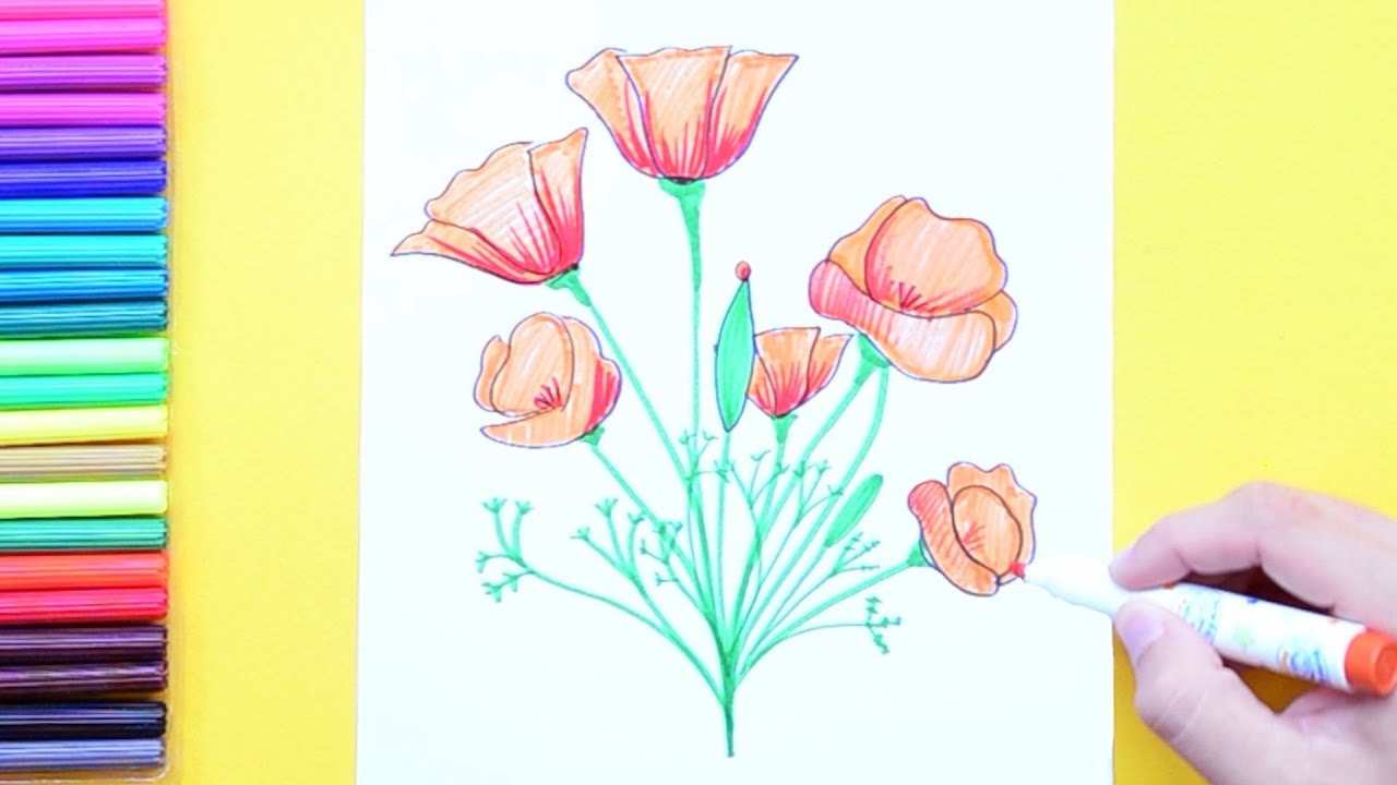 How To Draw And Color California Poppy State Flower Of California