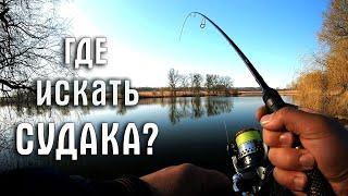 Как найти и поймать судака Ловля судака на джиг весной Советы рыболова любителя