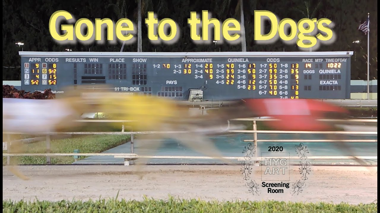 Gone To The Dogs Palm Beach Kennel Club West Florida