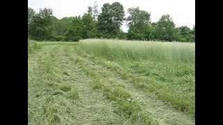 Plant winter rye