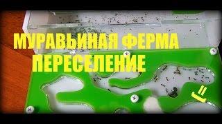 МУРАВЬИНАЯ ФЕРМА #2 - ПЕРЕСЕЛЕНИЕ !