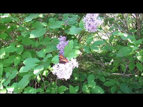 Wolfgang Amadeus Mozart Cosi fan tutte, K. 588 Aria - Una donna a quindici anni