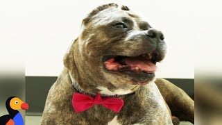 DIY Dog Bow Ties Modeled by Shelter Dogs | The Dodo Pet Parent Hacks thumbnail