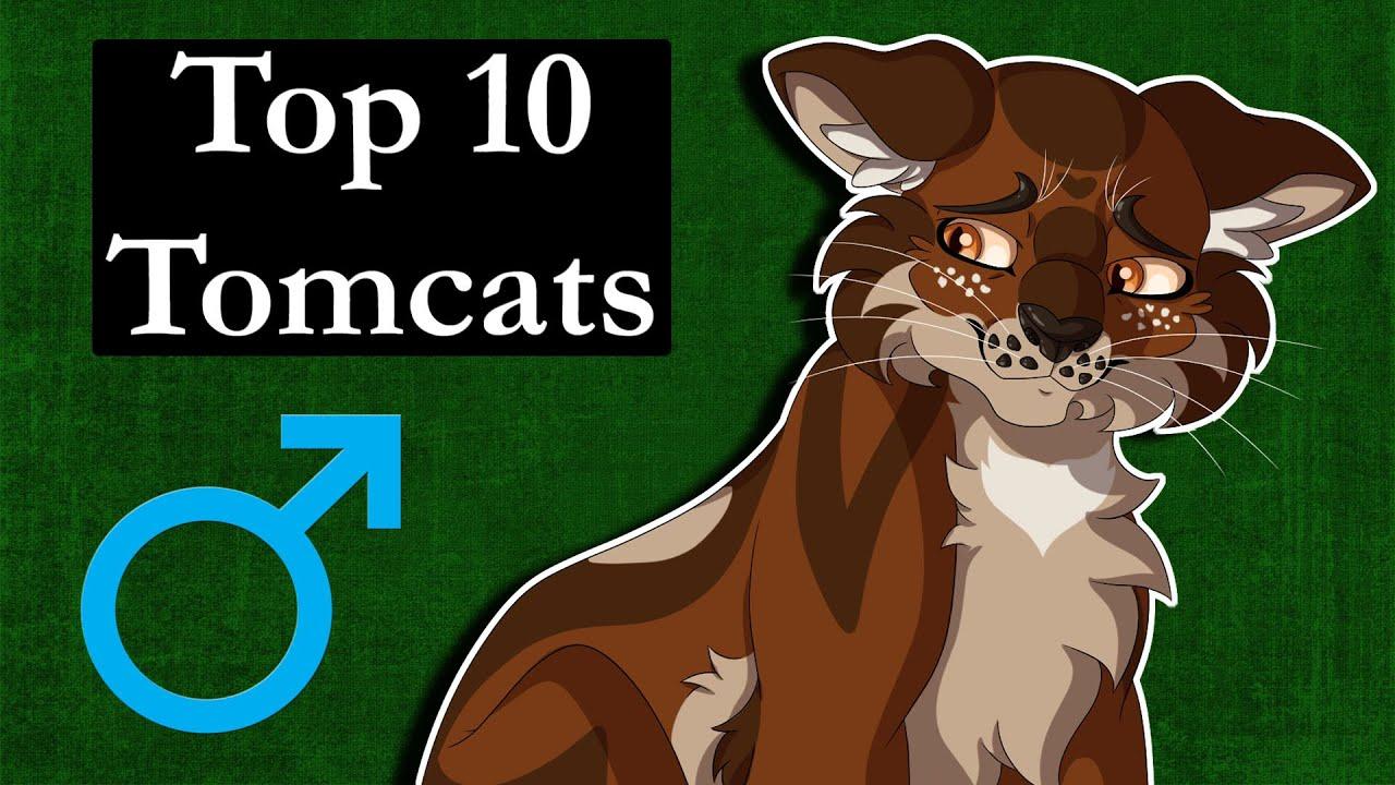 Top 10 Tomcats in Warrior Cats
