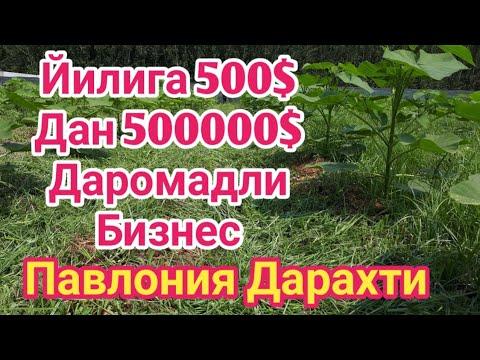 КАТТА ДАРОМАДЛИ БИЗНЕС ПАВЛОНИЯ ДАРАХТИ