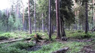 Alutaguse mets 22 мая 2014 г  21-35