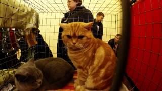Влог: Выставка кошек. Экзотические кошки. Vlog: Exhibition of cats. Exotic cats