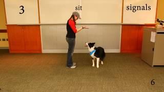 Trick Dog Titles (Novice, Intermediate, Advanced,  Expert) - Dazzle