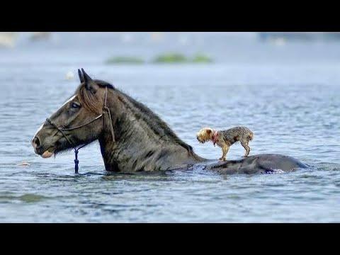 Курица отбила атаку Орла. Животные спасают друг друга от хищников !!! - Видео онлайн
