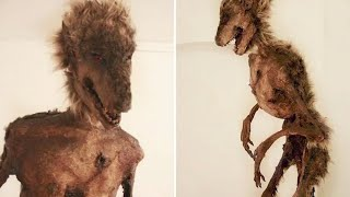 If These 15 Creatures Were Not Filmed, No One Would Believe It