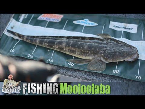 SUNSHINE COAST Estuary Fishing With Aaron Trims | CoastfishTV Ep4