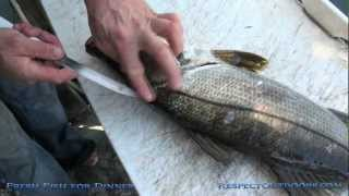 "Fresh Fish For Dinner "" How to Fillet a fish"" (Snook)"