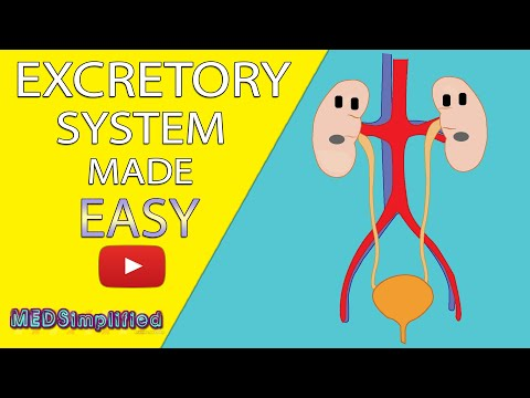 HUMAN EXCRETORY SYSTEM Made Easy - Human Urinary System Simple Lesson