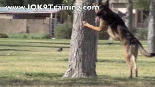 Iq K9 Training | Dog Tricks -  Cardiff By The Sea Dog Training