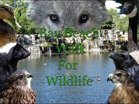 Bay Beach Walk for Wildlife 2017
