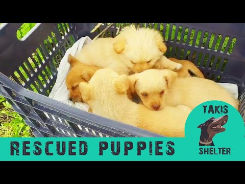 Rescued Puppies and Kittens of 2019 so far. Abandoned, trapped, lost - Takis Shelter