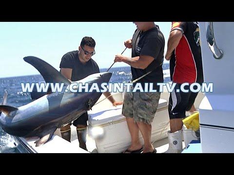Thresher Shark Fishing Tips 2016 | Chasin' Tail TV