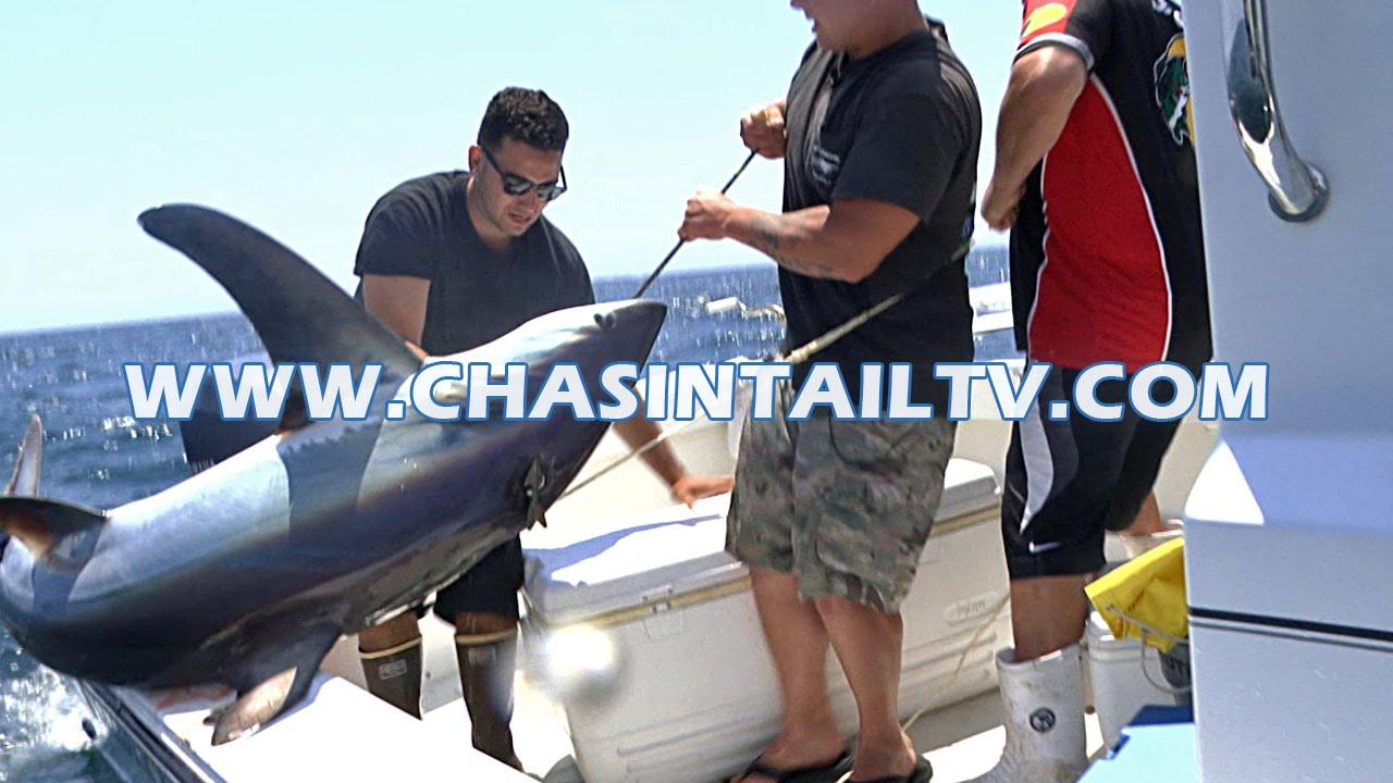 Thresher shark fishing tips 2016 chasin 39 tail tv youtube for Chasing tails fishing report