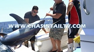 Thresher Shark Fishing Tips 2016 | Chasin' Tail TV(Nearshore sharking with Capt. Joey and his buddy Scott. The guys share some of their secrets for catching threshers. Please join http://www.chasintailtv.com for ..., 2016-06-23T18:38:59.000Z)