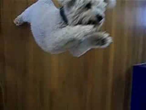 The Funny Random Dog Dance.