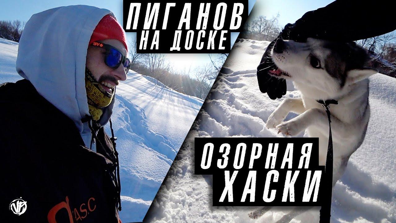 озорная хаски Капелла и сноубординг в Загородном парке Самары