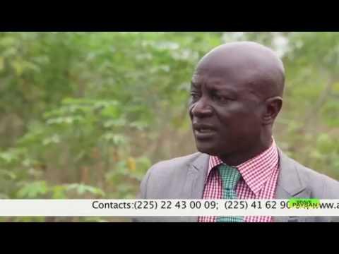 BRAVE PAYSAN I La transformation du manioc et les plantations clés en main