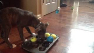 Homemade Dog Toy Puzzle! Awesome