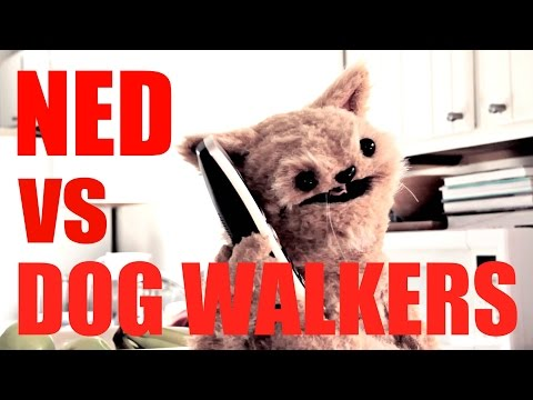 This Cat is NED – Ned vs Dog Walkers