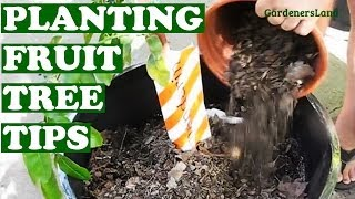 How To Plant Orange Mandarin Fruit Tree In Wine Barrel - Fruits Trees Gardening Tips Video Jazevox