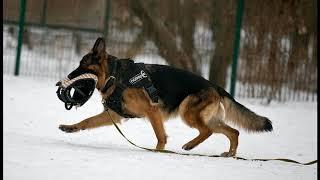 Police Dog Harness