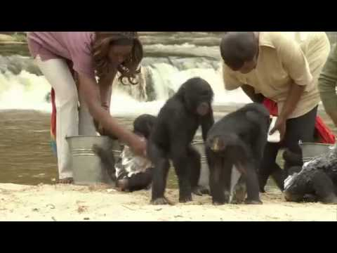 Bonobos (2010) Documentaire French Version