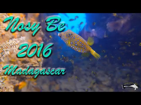 Madagascar 2016 Diving Underwater and more