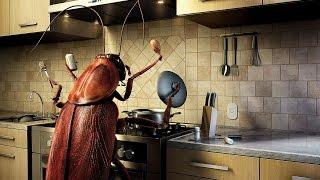 видео Борьба с насекомыми и вредителями в доме
