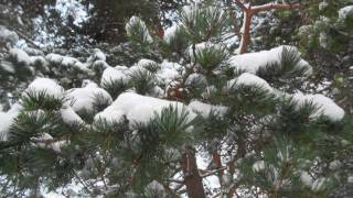 Relaxing nature scenes & chinese instrumental music - In The Forest In Winter Season VI
