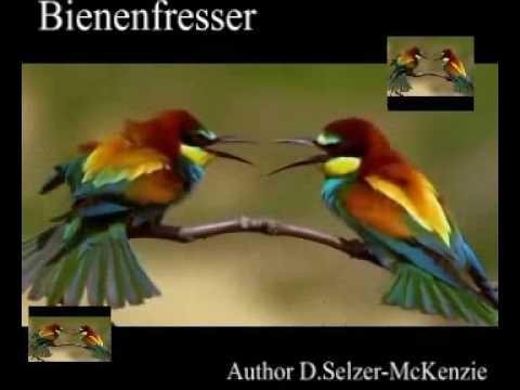 Bienenfresser Vogel Birds Tiere Animals Natur SelMcKenzie Selzer-McKenzie