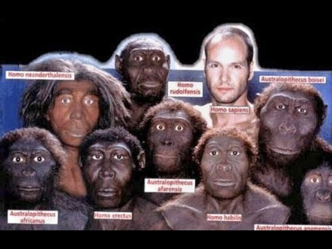 LA GRAN MENTIRA DE LA EVOLUCIÓN - el eslabón perdido