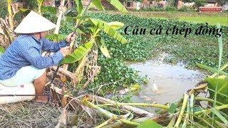 Khám phá điểm câu cá chép đồng | Cá lôi  cần xuống sông
