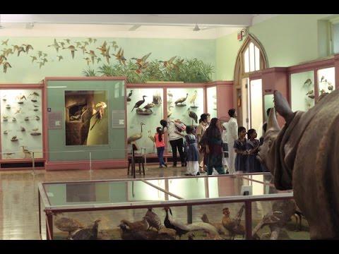 CHHATRAPATI SHIVAJI MAHARAJ VASTU SANGRAHALAYA MUSEUM Natural History