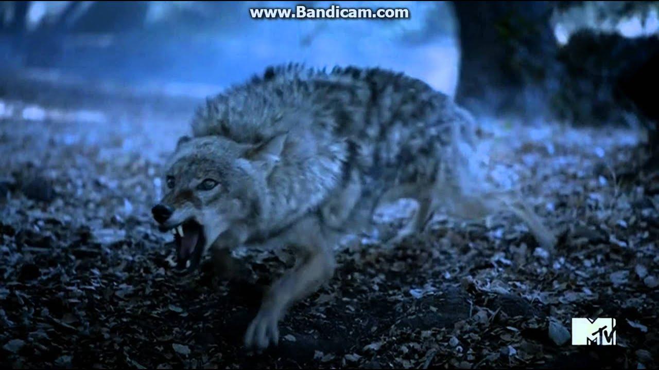 Bsto Teen Wolf