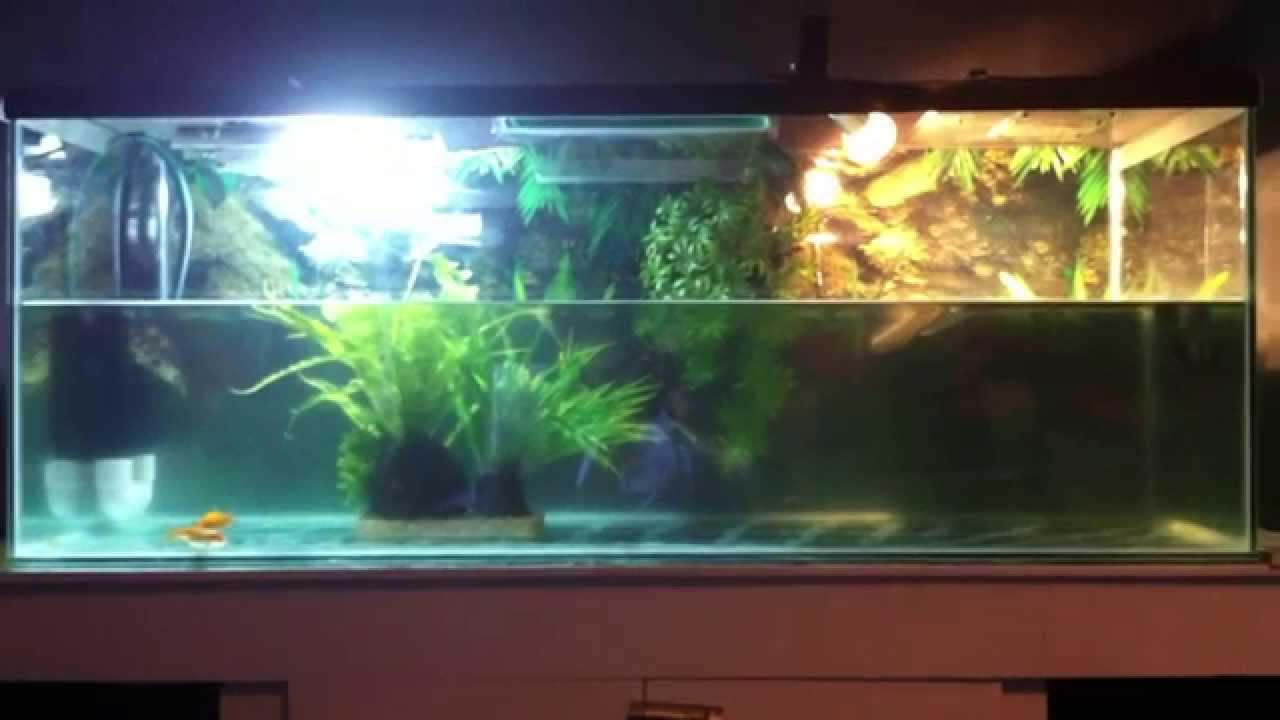 Turtles Tank Setup Wet Dry Style Filter Youtube